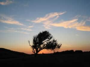 Hotel Meyer bBergen aan Zee, mooie avondlucht met het silhouette van een verwaaide boom op de voorgrond.